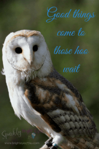 Good things come to those hoo wait- owl meme