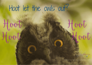 Hoot let the owls out- owl meme