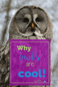 Why owls are cool